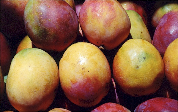 IMAGE(http://www.maria-brazil.org/newimages/mangoes.jpg)